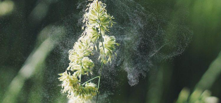 Neue Methode für Allergietest: Messung per Nasenabstrich